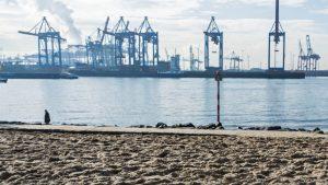 Makler Hamburg Blankenese Elbstrand Hafenkräne